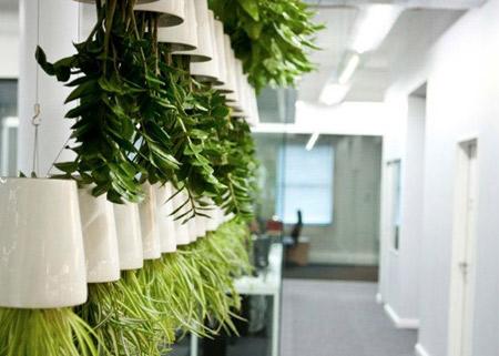 Sky planter im greenbop online shop kaufen for Zimmerpflanzen modern