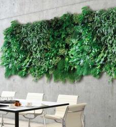 Grüne Wand mit Pflanzen