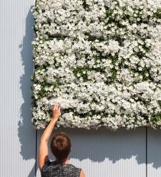 Pflanzenwand karoo weiß