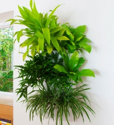 Woolly Pocket Living Wall Planter