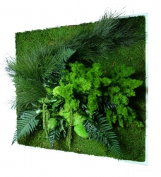 vertikaler garten greenbop online shop seite 2. Black Bedroom Furniture Sets. Home Design Ideas