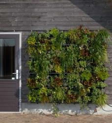 Vertikaler Garten für außen