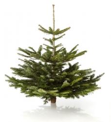 mini weihnachtsbaum geschm ckt im greenbop online shop kaufen. Black Bedroom Furniture Sets. Home Design Ideas