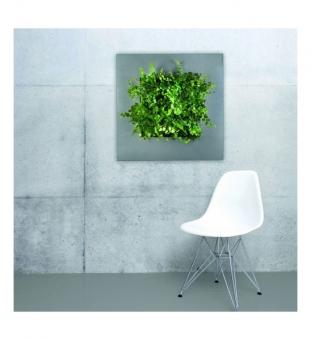 LivePicture Pflanzenbild 70 x 70 cm