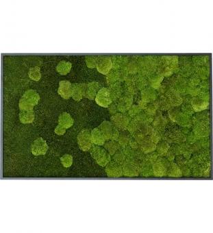 Moosbild mit Verlauf 100 x 60 cm