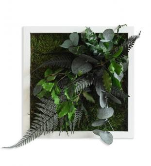 Pflanzenbild 22 x 22 cm