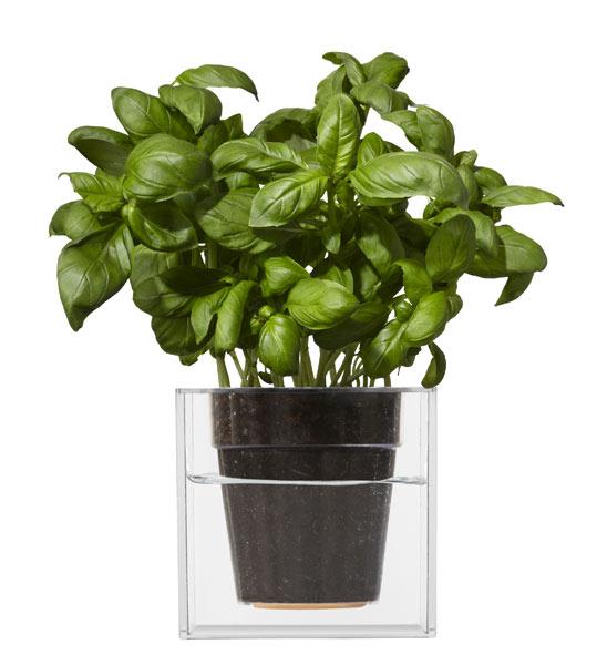 Boskke Cube Blumentopf | Im Greenbop Online Shop Kaufen Blumentopfe Mit Wasserspeicher