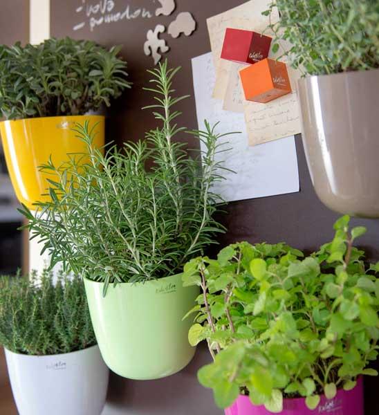 Magnetischer Pflanzentopf Im Greenbop Online Shop Kaufen