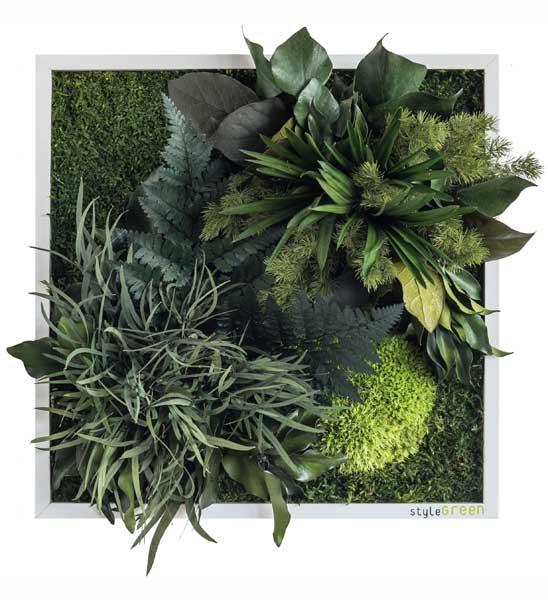 pflanzenbild 35 x 35cm im greenbop online shop kaufen. Black Bedroom Furniture Sets. Home Design Ideas