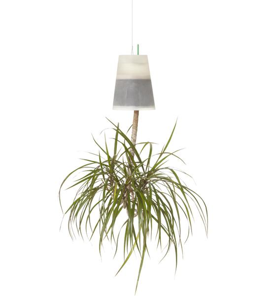 boskke sky planter transparent clear m 14cm x 19cm h im greenbop online shop kaufen. Black Bedroom Furniture Sets. Home Design Ideas