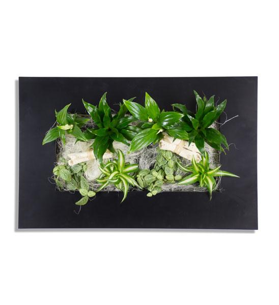 wandgarten flowerwall schwarz 33 x 55 cm im greenbop. Black Bedroom Furniture Sets. Home Design Ideas