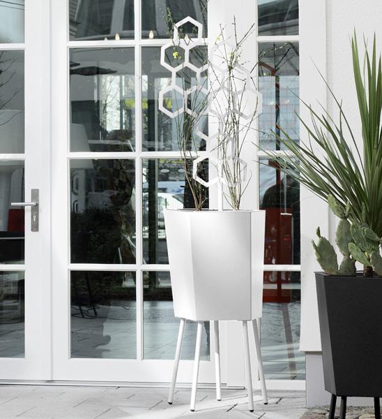 elevation pflanzk bel mit spalier im greenbop online. Black Bedroom Furniture Sets. Home Design Ideas