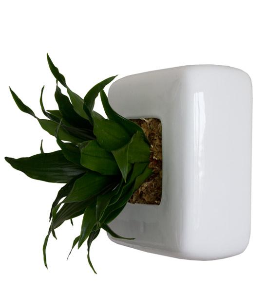 flowerbox wei mit drachenbaum im greenbop online shop. Black Bedroom Furniture Sets. Home Design Ideas