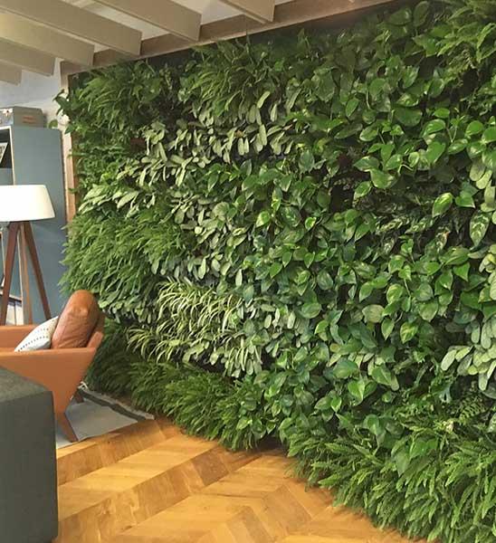 gr ne wand mit pflanzen im greenbop online shop kaufen. Black Bedroom Furniture Sets. Home Design Ideas