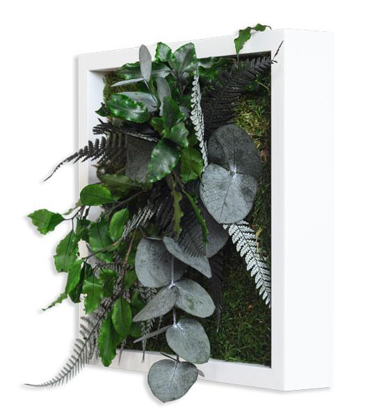 pflanzenbild 22 x 22 cm  im greenbop online shop kaufen