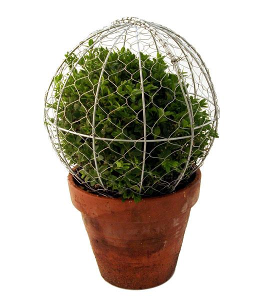buchsbaum schablone pyramide im greenbop online shop kaufen. Black Bedroom Furniture Sets. Home Design Ideas