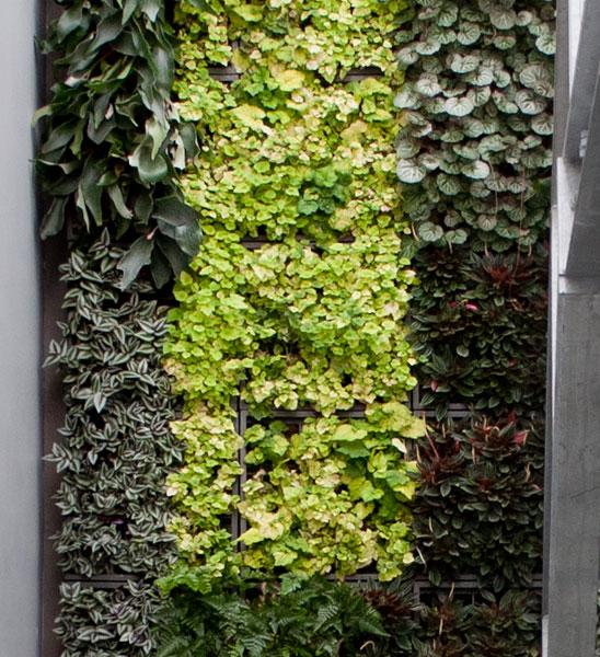 Pflanzenwand karoo grau im greenbop online shop kaufen - Wandgarten wohnzimmer ...
