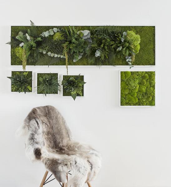 kugelmoosbild 35 x 35 cm im greenbop online shop kaufen. Black Bedroom Furniture Sets. Home Design Ideas