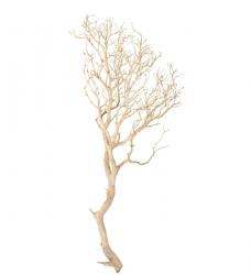 Dekoast Manzanita Sand 90-100 cm hoch
