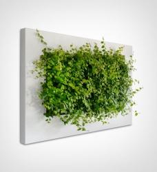 LivePicture Pflanzenbild 110 x 70 cm