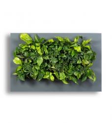 LivePicture Pflanzenbild 110 x 70 cm anthrazit