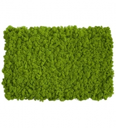 Moosmatte aus Islandmoos hellgrün - 2er Set je 75x55 cm