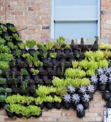 Pflanzenwand SkALE 12er Set