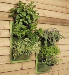 Burgon & Ball Verti-Plant grün
