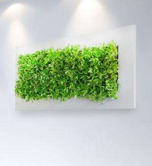LivePicture Pflanzenbild 150 x 70 cm