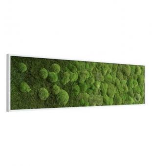 Moosbild mit Verlauf 140 x 40 cm